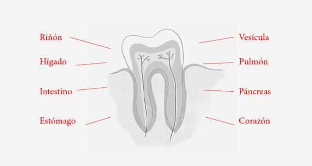 Odontologia-holistica.jpg